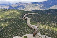 Dried pine trunk in the mountains