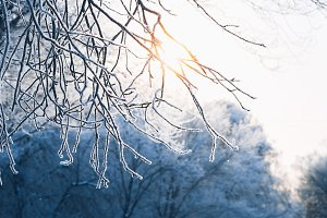 Beautiful tree winter branches