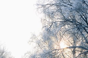 Beautiful  tree branches in  frost
