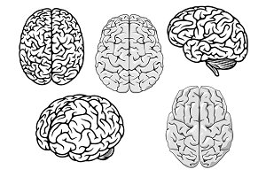 Black and white cartoon human brains