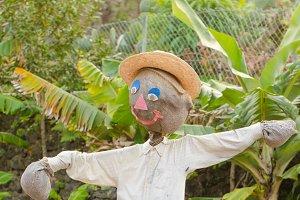 Original scarecrow.