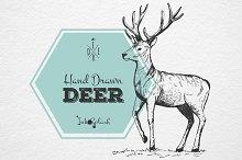 Hand drawn cute Deer