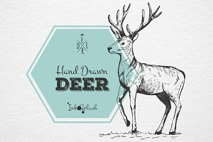 Hand drawn cute Deer