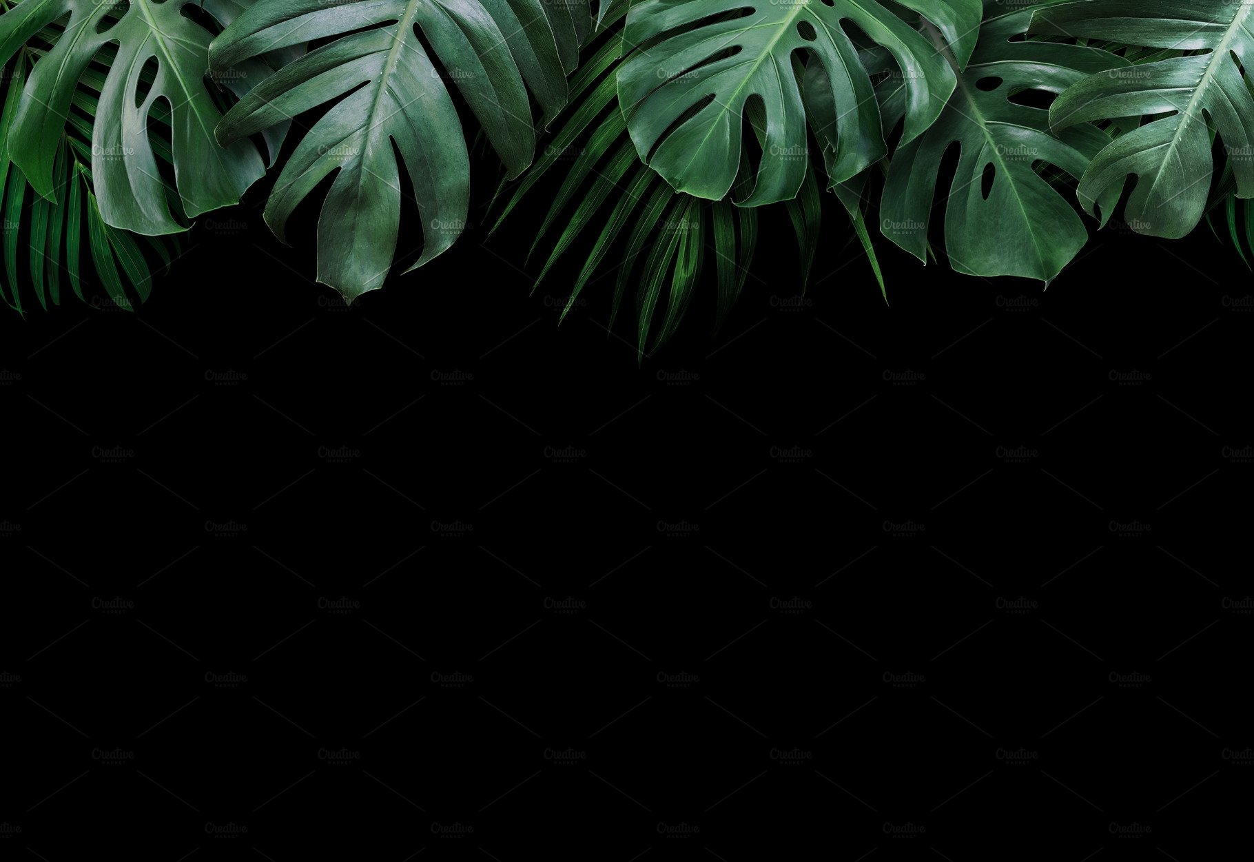 Tropical Leaves On Black Background Containing Backdrop Background And High Quality Nature Stock Photos Creative Market Seamless realistic vector botanical pattern black background. tropical leaves on black background containing backdrop background and