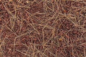 Pine needles autumn background