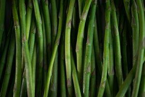 texture of fresh asparagus