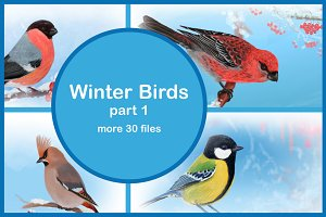 Winter Birds, part 1