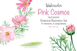Watercolor Set, Pink Cosmos Flowers