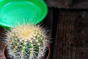 Beautiful little cactus
