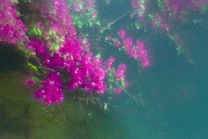 Pink flowers Thailand