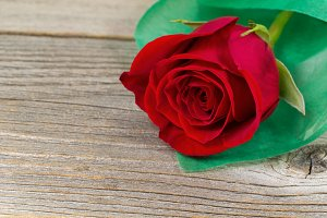 Romance with Red Rose