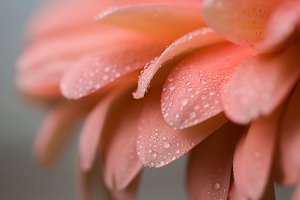 Pretty Peachy Petals