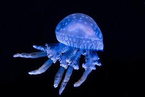 Underwater Wonders II