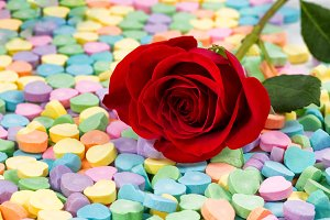 Candy and Red Rose