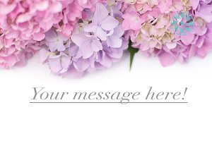 Styled Stock Photo Flower Banner
