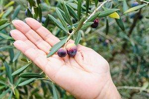 Hand holding olives.jpg