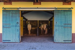 Two white horses in the stable.jpg