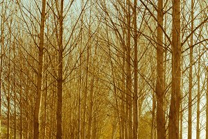 Leafless trees in autum.jpg