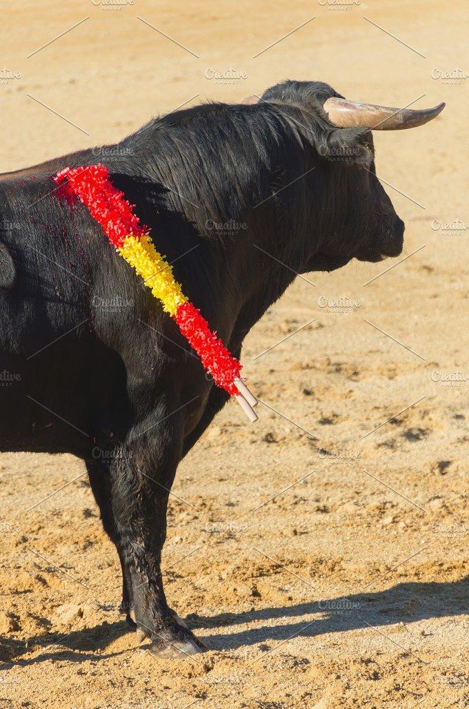 Bull standing in the bullfight.jpg - Animals