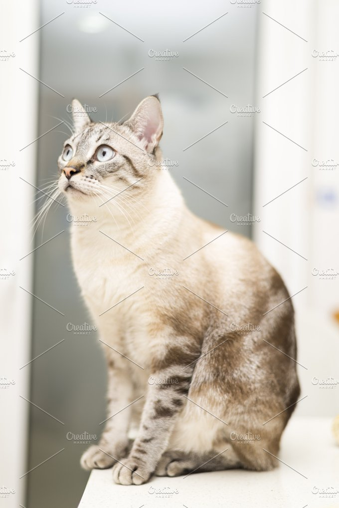 _NIK5915.jpg - Animals