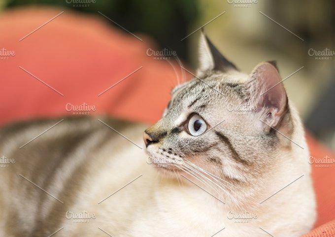 _NIK5943.jpg - Animals