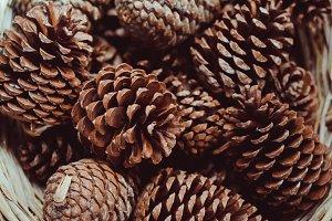 Big Cedar Cones