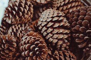 Nice Pine Cones