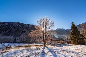 Sun penetrating the tree in winter