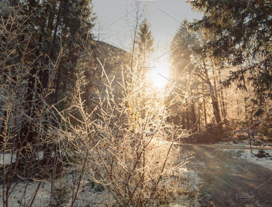 dark winter forest nature photos creative market