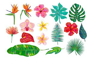 Tropical flowers, leaves collection