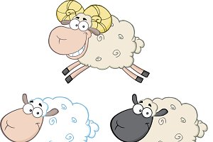 Funny Sheep Collection - 3