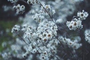 Dry flowers in wintertime