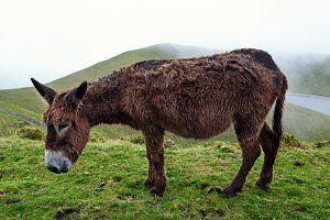 Donkey on field
