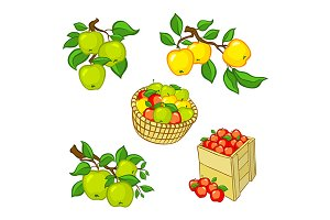 Vintage colorful apple harvest set.