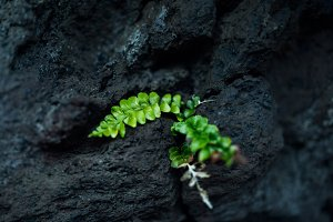 Green plant on the rock