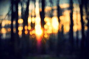 Bokeh Woods