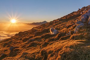 Dog at the top of the mountain