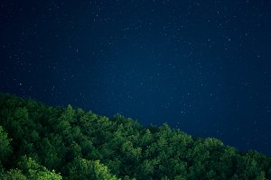 Night sky and the forest
