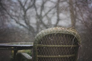 Winter Weathered Wicker