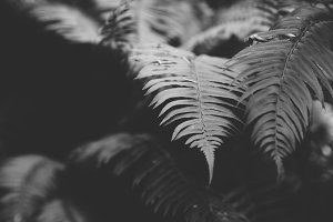 Ferns in Black & White
