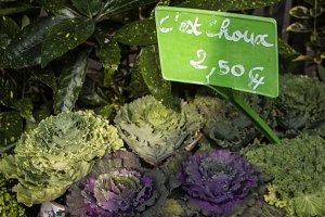 Cabbage in Marche Aux Fleurs