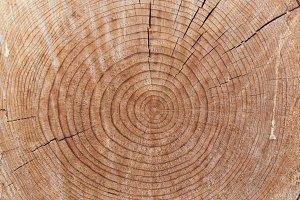 Wood trunk