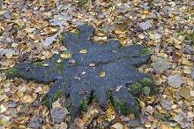 Star-shaped stump.