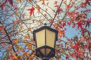 Streetlight and autumn