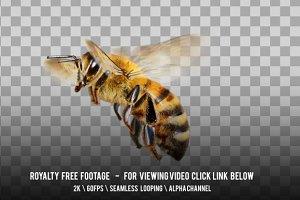Bee Honey Fly