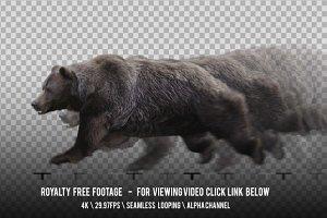 Brown Bear Running
