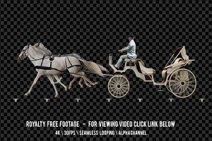 Carriage Horse Drawn White