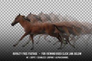 Horse Red Running