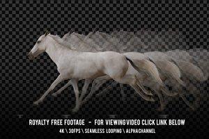 Horse White Running