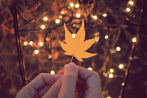 Hand holding red maple leaf
